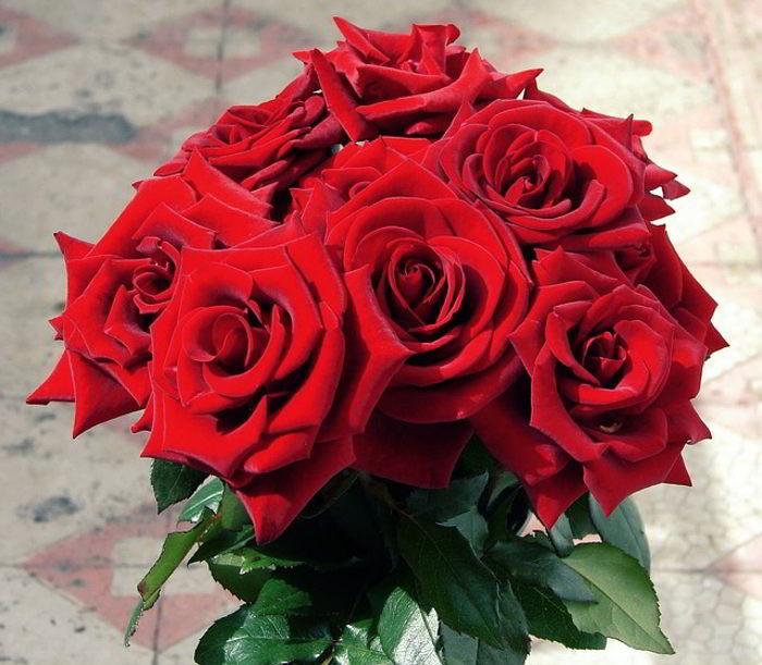 Hoa hồng đỏ kiêu sa, lãng mạn