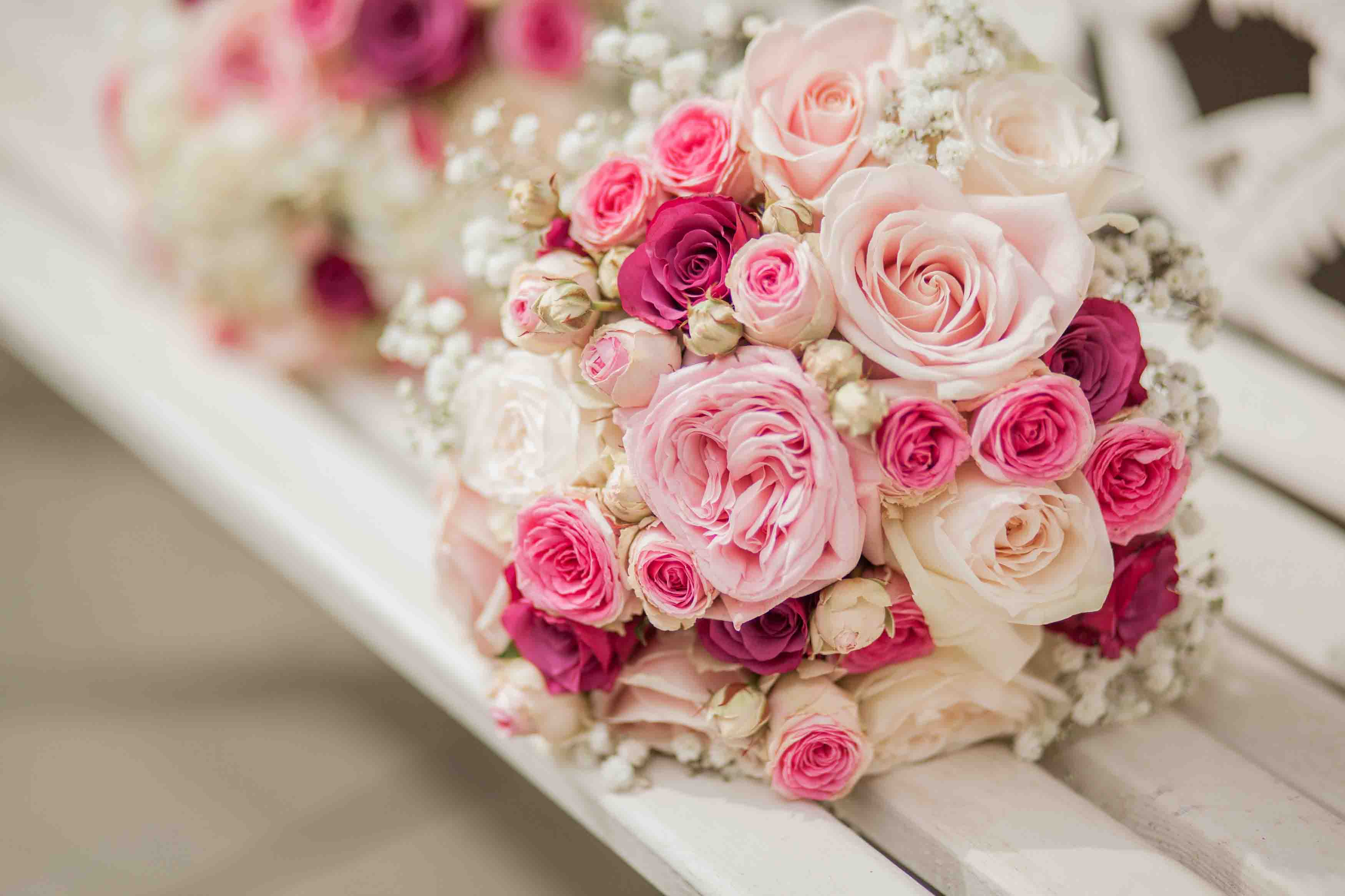 Hoa hồng phớt mộng mơ